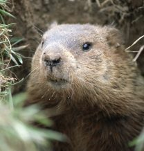 Groundhog Day Reminders to Uplift COVID-Weary Employees