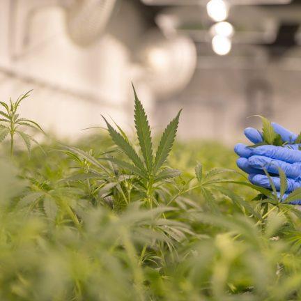 Unpacking the Employee Marijuana Use Dilemma